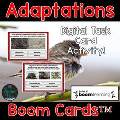 Adaptations Task Cards - Distance Learning Compatible Digital Boom Cards™ Ecosystem Activities, Science Activities, Science Lessons, Life Science, Middle School Science, Physical Science, Creative Teaching, Task Cards, Set Cover