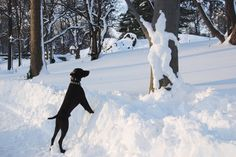 A Dancing Snow Woman and an Onlooking Dog in Central Park  Photographer: YTCHEN