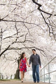 Cherry blossom engagement photo shoot in Washington DC