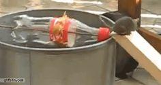 Coke Bottle Mouse Trap  Феноменально!