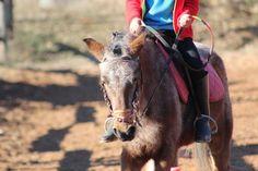 http://www.terresdesainthilaire.com/centre-equestre/lecole-dequitation-et-de-voltige/