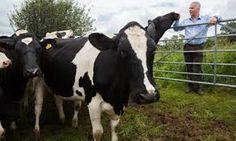 Image result for dairy farming england