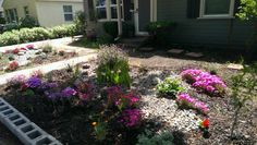 Making progess took out bushes in front of other window, planted more, lavender, carnations & California Poppies