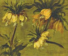 stilllifequickheart:  Pancrace Bessa  Fritillaria Imperiali  Early 19th century