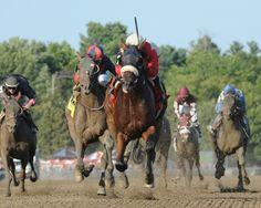 Six Virginia Stakes Horses Dominate at Saratoga, Arlington (2014) | Virginia Thoroughbred Association