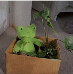 Funny Frogs, Cute Frogs, Marzia And Felix, Frog Or Toad, Frog House, Amazing Frog, Frog Theme, Frog Pictures, Frog Crafts