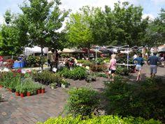 Plants Spring Fever, Winter Garden, Dolores Park, Bloom, Plants, Plant, Planets, Terraced Garden