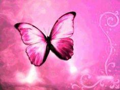Pink Butterfly Desktop Wallpaper   Butterfly Desktop Wallpapers and Butterfly Backgrounds 25 of 61