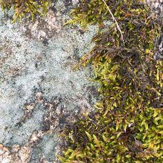 Granite with moss and lichen. Granite, Explore, Granite Counters, Exploring