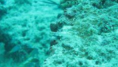 amami diving  http://www.marineblue-kakeroma.com/diving/photo/33