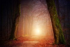 Forest Light photo by Johannes Plenio ( on Unsplash Poster App, Negative Emotions, Public Domain, Cairo, Free Images, Paths, Temple, Spirituality, Country Roads