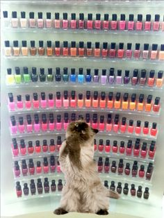 """""""Oh, I just love Zoya Nail Polish! So many beautiful colors that would look puuuuuurfect on me"""" - Have a great weekend everyone!!!"""