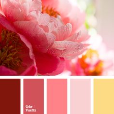 amber color, beige-red color, bright red color, cherry color, color combination in interior, color matching for repair, color of red ranunculus, crimson color, maroon color, monochrome color palette, red and yellow colors, red color, red color shades, sunny yellow color, warm yellow color.