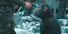 Planeta dos Macacos: A Guerra ganha teaser anunciando que o trailer sai amanhã (30)