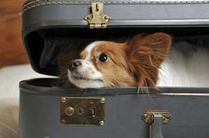 Flying with Furbabies: How CBD Can Relieve Dog Anxiety CBD for anxiety Dog Separation Anxiety, Dog Anxiety, Anxiety Tips, Fear Of Flying, Aggressive Dog, Pet Travel, Travel Tips, Old Dogs, Freundlich