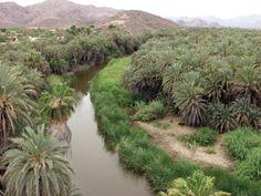 99. Oasis de Mulegé, Baja California Sur, Mx