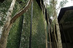 Treatment tembok kavling- Breeze block with ficus Kevin Mark Low: Small projects | ArchitectureAU