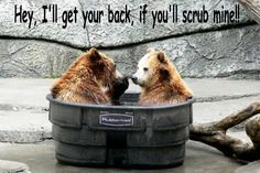 funny bear pictures - Google Search