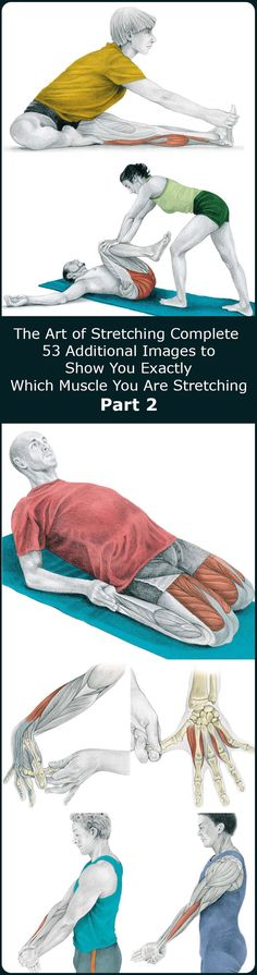 The Art of Stretching Complete – 53 Additional Images to Show You Exactly Which Muscle You Are Stretching (Part 2) - Page 4 of 4 - The Health Science Journal