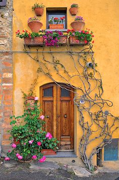 Loving the integral flower boxes! Maybe add an arched trellis outlining the door for vine growth instead of that crazy free for all.