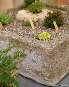 These lightweight concrete containers are ideal for succulents or alpine plants, which have adapted to growing on rocky ledges and shallow soil.