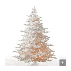 White Cascades Fir Christmas Tree