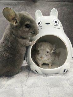 Cute Totoro/Chinchilla Ceramic Cool House/Hideout Light Grey