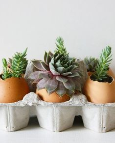 How To Plant Succulents in Eggshells — Projects from The Kitchn