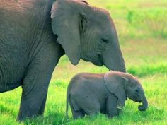 Momma elephant and her baby. So sweet.