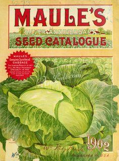 001-Cabbage      ...