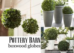 diy pottery barn boxwood globes {in my own style}