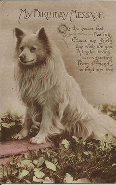 POMERANIAN SPITZ REAL PHOTOGRAPHIC DOG POSTCARD Spitz Pomeranian, Black Pomeranian, Pomeranians, Miniature American Eskimo, American Eskimo Dog, Dog Photos, Dog Pictures, German Spitz, Spitz Dogs