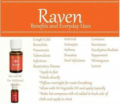 Raven essential oil for respiratory