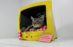 Old television sets, VCRs, and suitcases = pet beds and food bowl holders.