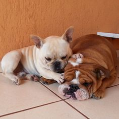 """""""Here, close your eyes and go to sleep""""... """"you can dream of Bacon"""", French Bulldog and English Bulldog Besties, #frenchie #englishbulldog by jmarcoz"""