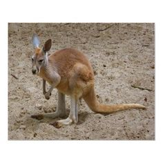 kangaroo....little more cartoon/fun