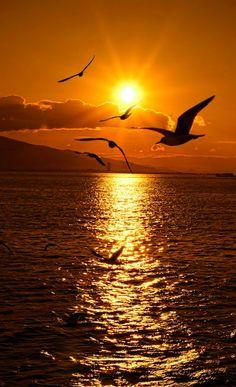 Seagull sunset in Izmir on Turkeys Aegean Sea coast photo: Emre KAYA on 500 Beautiful Nature Pictures, Beautiful Nature Wallpaper, Amazing Nature, Beautiful Landscapes, Beautiful World, Sunset Photography, Landscape Photography, Sunset Wallpaper, Amazing Sunsets