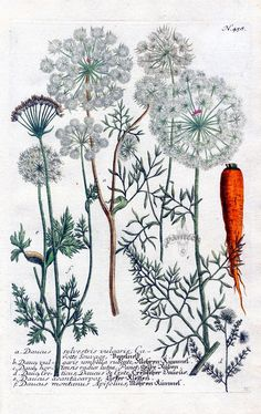 47 Ideas For Science Art Drawings Beautiful Illustration Botanique, Plant Illustration, Graphic Design Illustration, Botanical Drawings, Botanical Prints, Impressions Botaniques, Art Drawings Beautiful, Plant Drawing, Science Art
