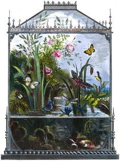 'The Vivarium; or, Insect-home' taken from 'The Butterfly Vivarium' by H. Published 1858 by William Lay. Art And Illustration, Antique Illustration, Vintage Illustrations, Vivarium, Art Nouveau, Illustration Botanique, Wow Art, Botanical Prints, Botanical Drawings