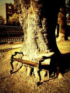This is such a cool bench/tree