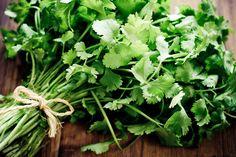 Koriander  #chineseparsley #yummy #herb #spice #spicy #didyouknow #health #goodforyou #goodtoknow #cilantro #italian #italy #coriander#goodtoknow