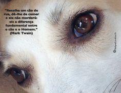 """""""Recolha um cão de rua, dê-lhe de comer e ele não morderá: eis a diferença fundamental entre o cão e o Homem."""" (Mark Twain)"""