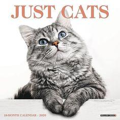 Kittens Gifts, Office Supplies Deluxe 2020 Kittens Wall Calendar with Over 100 Calendar Stickers Kittens Calendar 2020 Set /…