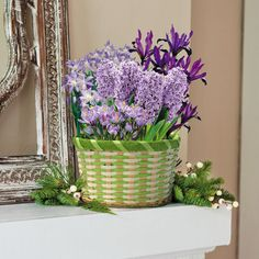 Elegant Holiday Mixed Bulb Garden   This Mix Of Iconic Spring Plants Is The  Perfect Gift For That Gardener That Misses Their Favorite Blooms.
