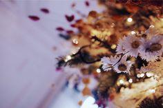 NOEL BOHÈME ET POÉTIQUE - Création Vanessa POUZET. Un sapin tout en fleurs séchées. #DIY #NOEL #christmas #sapindenoel #decorationnoel #decoration #boheme #fleurssechees Dandelion, Noel Christmas, Diy, Ethnic Recipes, Flowers, Plants, Blog, Dried Flowers, Fir Tree