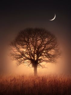 Tree silhouette under a crescent moon