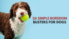Is your dog bored? Need some simple ways to keep your dog busy and entertained? Check out our list of 26 quick and simple ways to relieve dog boredom