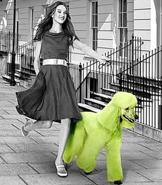 Dog gone green http://i.dailymail.co.uk/i/pix/2008/11/03/article-0-02561C0A000005DC-772_468x537.jpg
