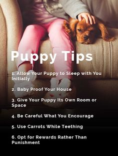 A lot of people tend to think that puppies are supposed to sleep on their own. This is actually not true at all. The truth of the matter is that you are going to have (...) #puppy #mypuppystory #dogstraining #pet #dog