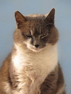 Your catitude!